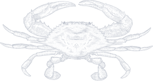 Crab_50percent2